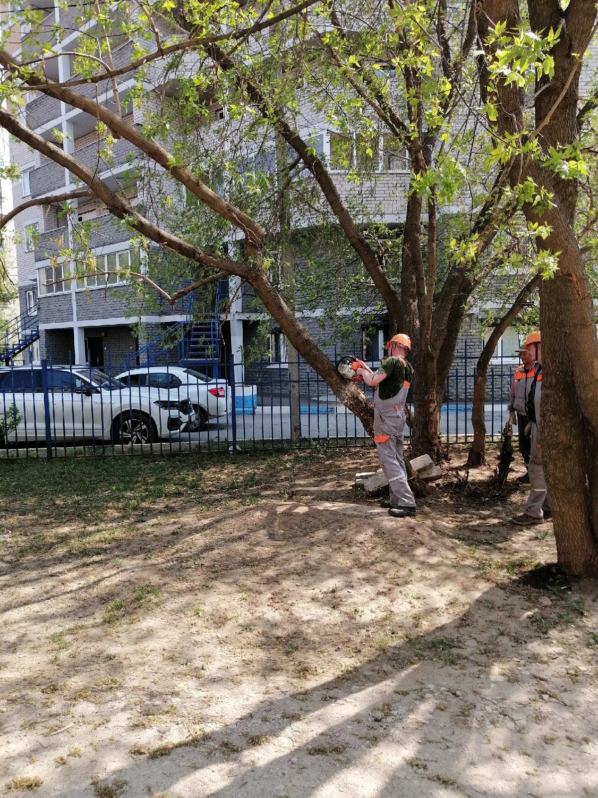 Спил сильно наклоненых деревьев Лепсе 58/2