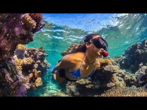фильм документальный 2018 Дикая природа Австралии Глубины океана Большой барьерный риф Документа