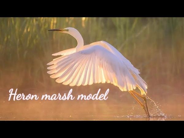 ЦАПЛЯ БОЛОТНАЯ МАНЕКЕНЩИЦА⚜⚜Heron Wetland Model⚜⚜