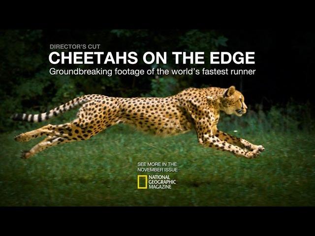 Cheetahs on the Edge--Directors Cut