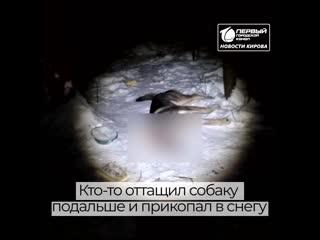 В Кирово-Чепецке неизвестный жестоко расправился с бездомной собакой.