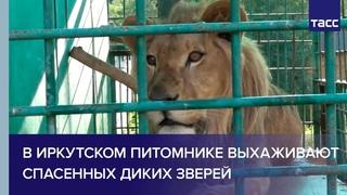 В иркутском питомнике для собак выхаживают спасенных диких зверей