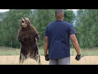 Медведица просила помощи у человека, рискуя жизнью ради спасения своего медвежонка