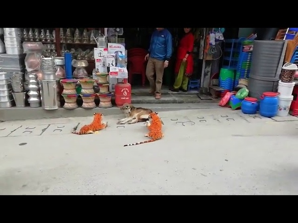 Sleeping Dog Gets Scared of Toy Tigers Upon Waking 1108857 2