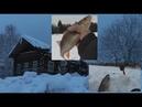 В ГЛУХОМАНЬ Богом забытый край на рыбалку Шопинг по деревенски