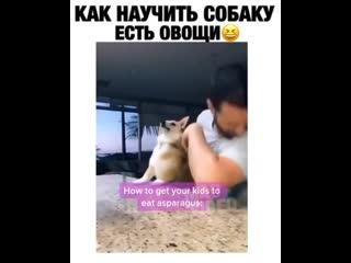 Как научить собаку есть овощи