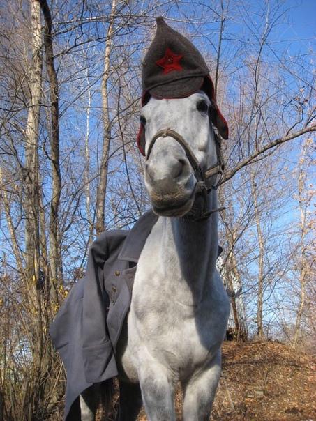 прикол картинки конь в пальто шоттки полупроводниковые