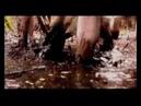 Metsatöll - Hundi loomine