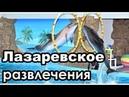 Куда сходить в Лазаревском/Часть 4. Развлечения.Дельфинарий, океанариум и пр.