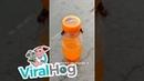 Bees Opening a Soda Bottle ViralHog